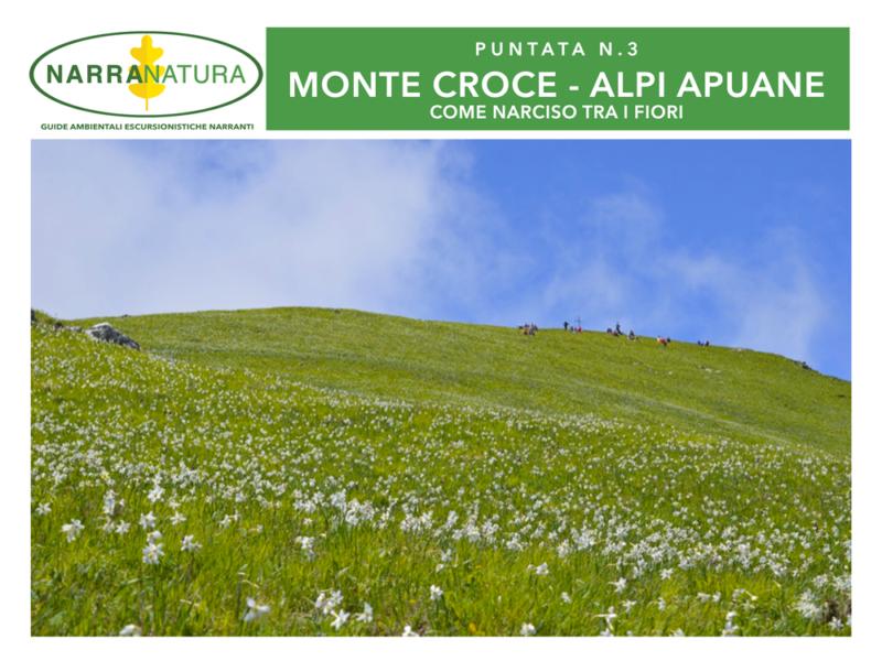 Sul Monte Croce (Alpi Apuane) come Narciso tra i fiori